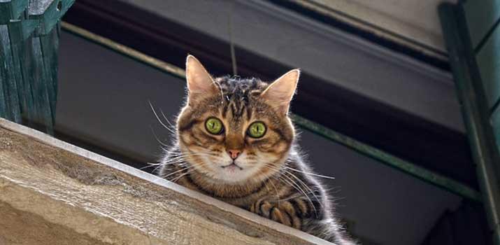 Cat seeking attention