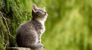 Loving Meow BG