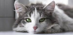 Loving-Meow cat blog homepage bg