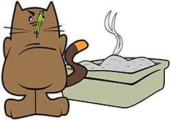 cat-hates-the-smell-of-a-Dirty-Litter-Box