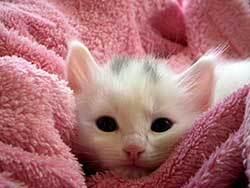 kitten that nees attention