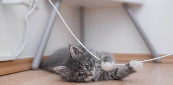 Cat won't stop chewing cords